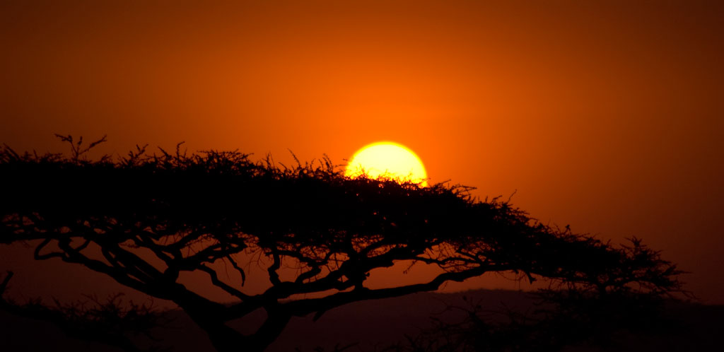 Circuito Zanzibar : I parchi della tanzania e zanzibar lisola delle spezie viaggiefoto