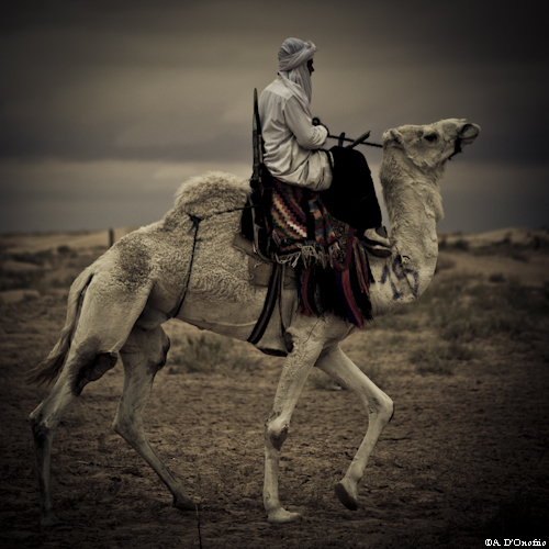 Festival Sahara (2 di 47)