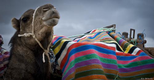 Festival Sahara (34 di 47)