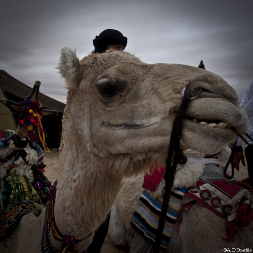 Festival Sahara (41 di 47)
